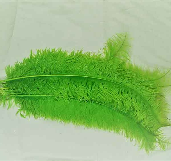 Feathers Light Green