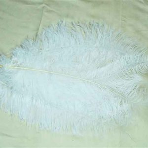 Feathers White